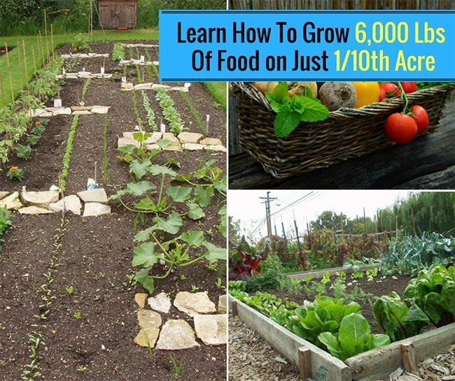 Learn How To Grow 6,000 Lbs Of Food on Just 1/10th Acre