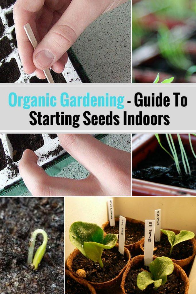 Organic Gardening - Guide To Starting Seeds Indoors