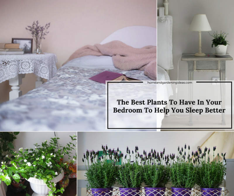 The Best Plants To Have In Your Bedroom To Help You Sleep