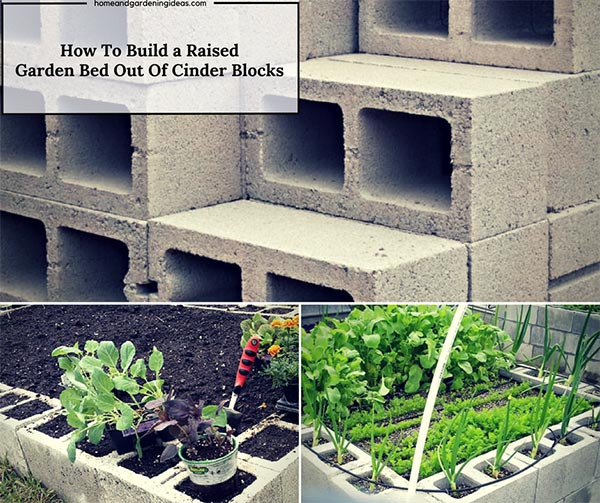 How To Build A Raised Garden Bed Out Of Cinder Blocks Home And