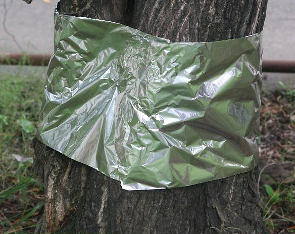 Wrap the trunks of young trees