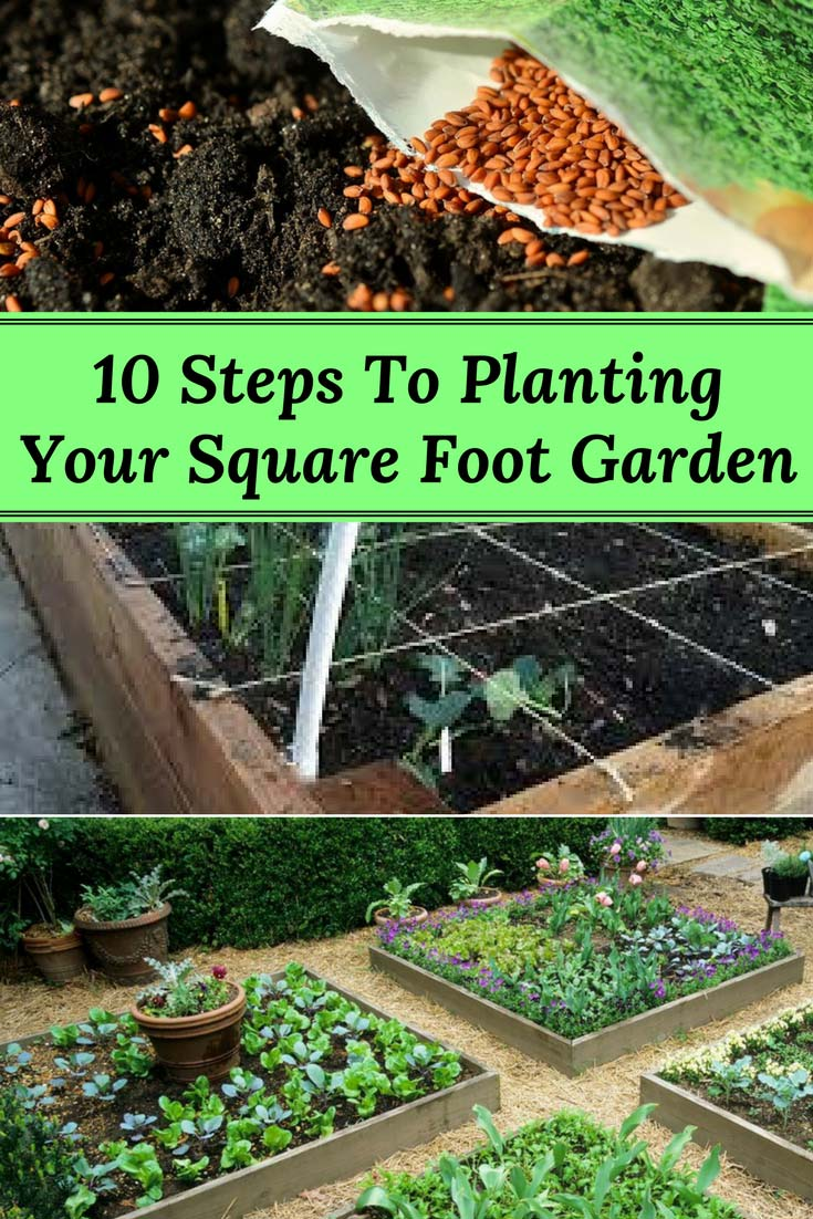 10 Steps to Planting Your Square Foot Garden Home and Gardening Ideas