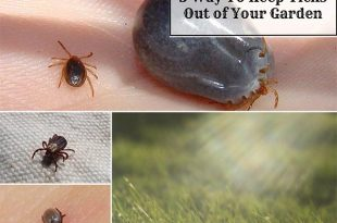 5 Way To Keep Ticks Out of Your Garden