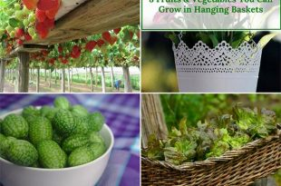 8 Fruits & Vegetables You Can Grow in Hanging Baskets