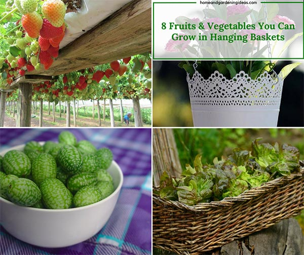 8 Fruits U0026 Vegetables You Can Grow In Hanging Baskets   Home And Gardening  Ideas