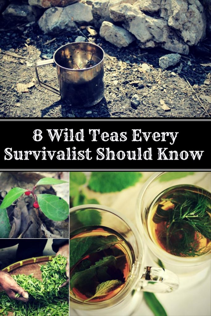 8 Wild Teas Every Survivalist Should Know