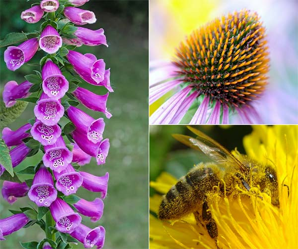 10 Pollinator Plants - Bring Bees To Your Garden