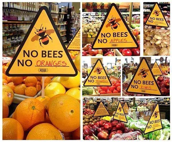 Life with out Bees