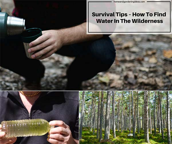 Survival Tips - How To Find Water In The Wilderness