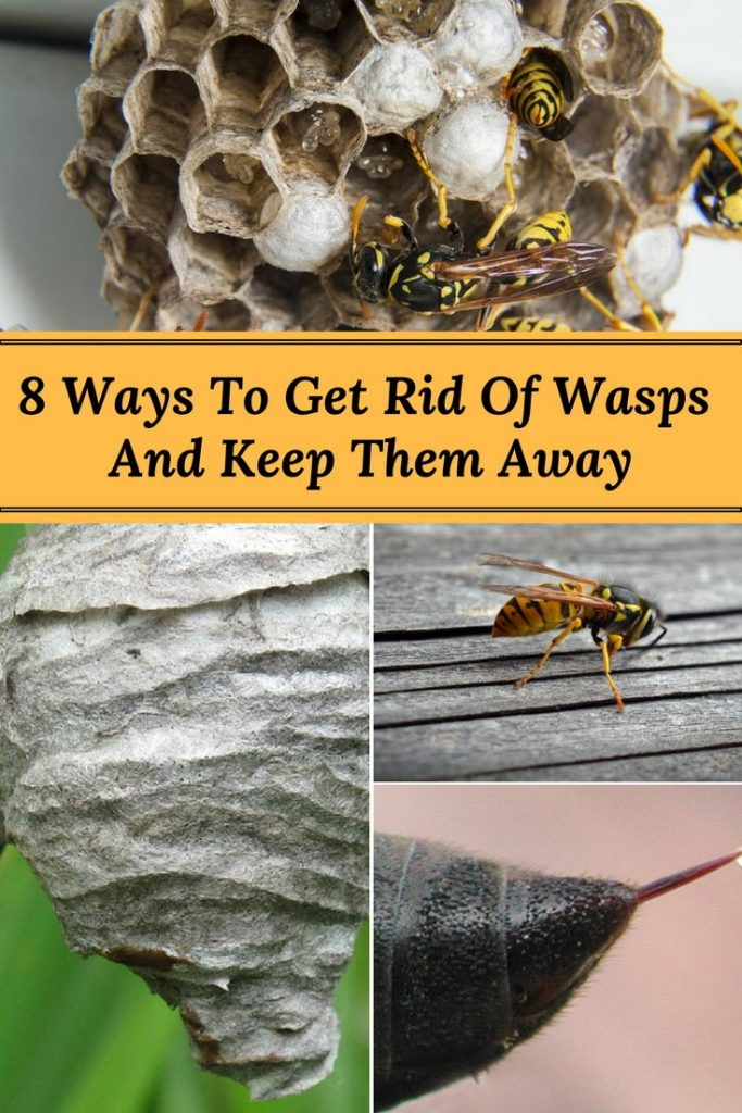 8 Ways to Get Rid of Wasps and Keep Them Away