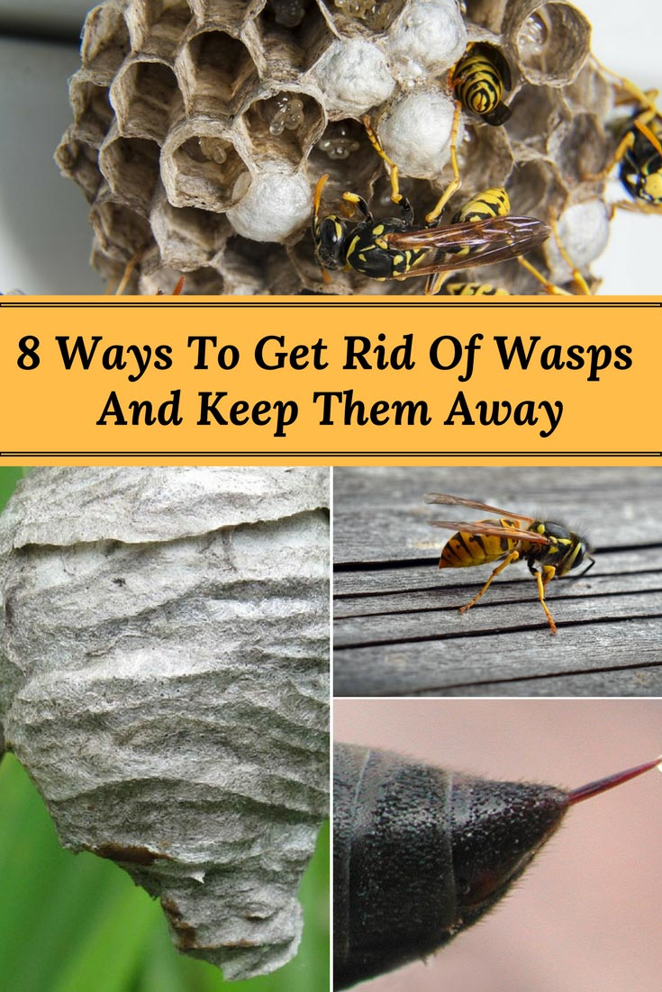 8 ways to get rid of wasps and keep them from returning home and gardening ideas - Keep ants away in simple ways ...