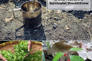 8 Wild Teas Every Survivalist Should Know