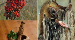 Traditional Cherokee Medicinal Plants
