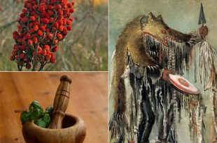 Traditional Cherokee Medicinal Plants