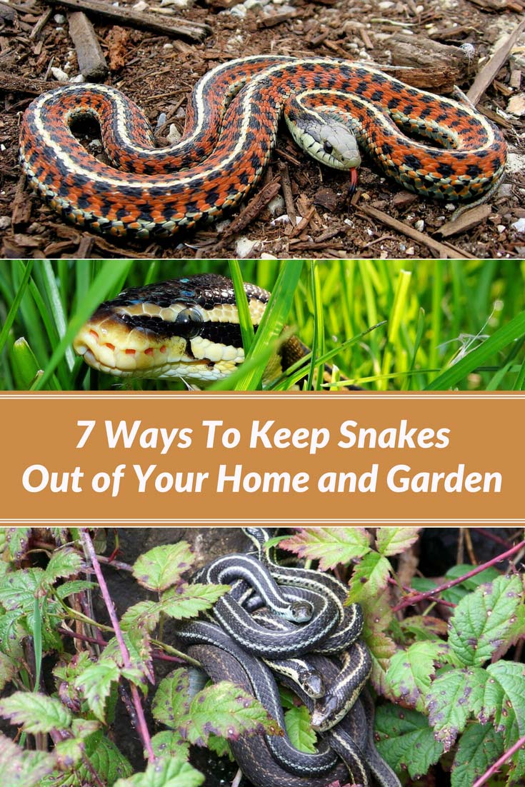 7 ways to keep snakes out