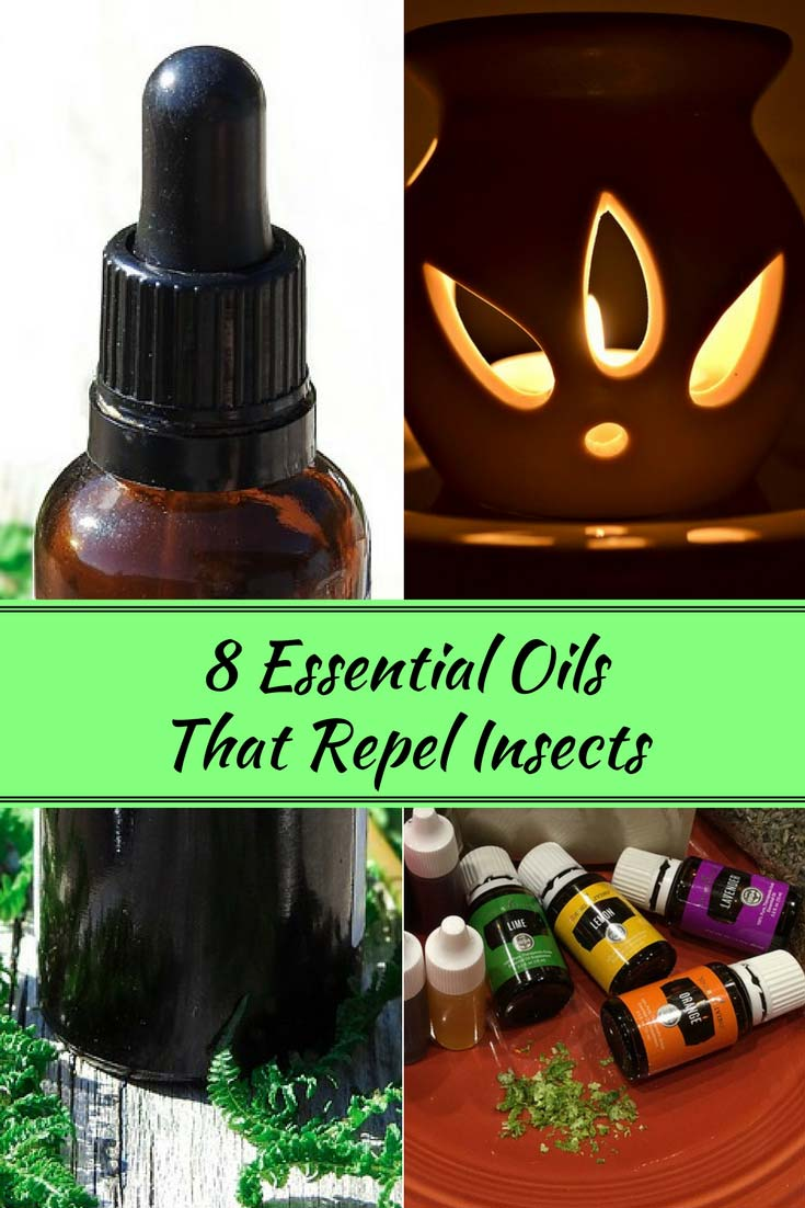 8 Essential Oils that Repel Insects