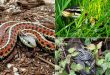 7 Ways To Keep Snakes Out of Your Home and Garden