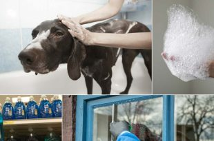 13 Ways To Use Dawn Dish Soap Around Your Home