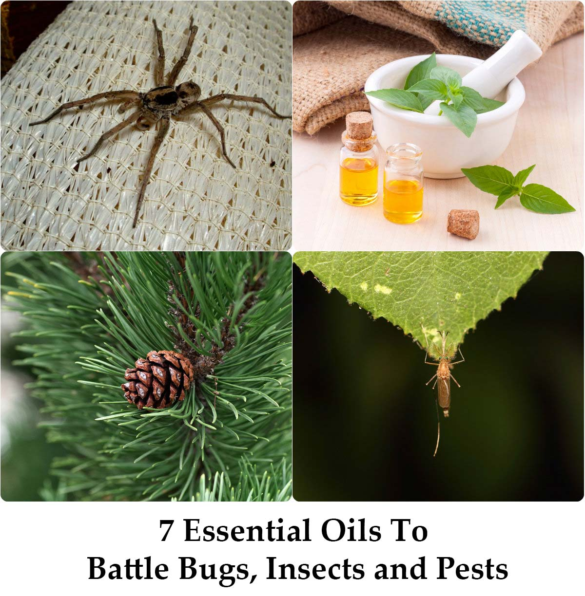 7 Essential Oils to Battle Bugs, Insects and Pests