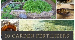 10 Garden Fertilizers You Already Have at Home