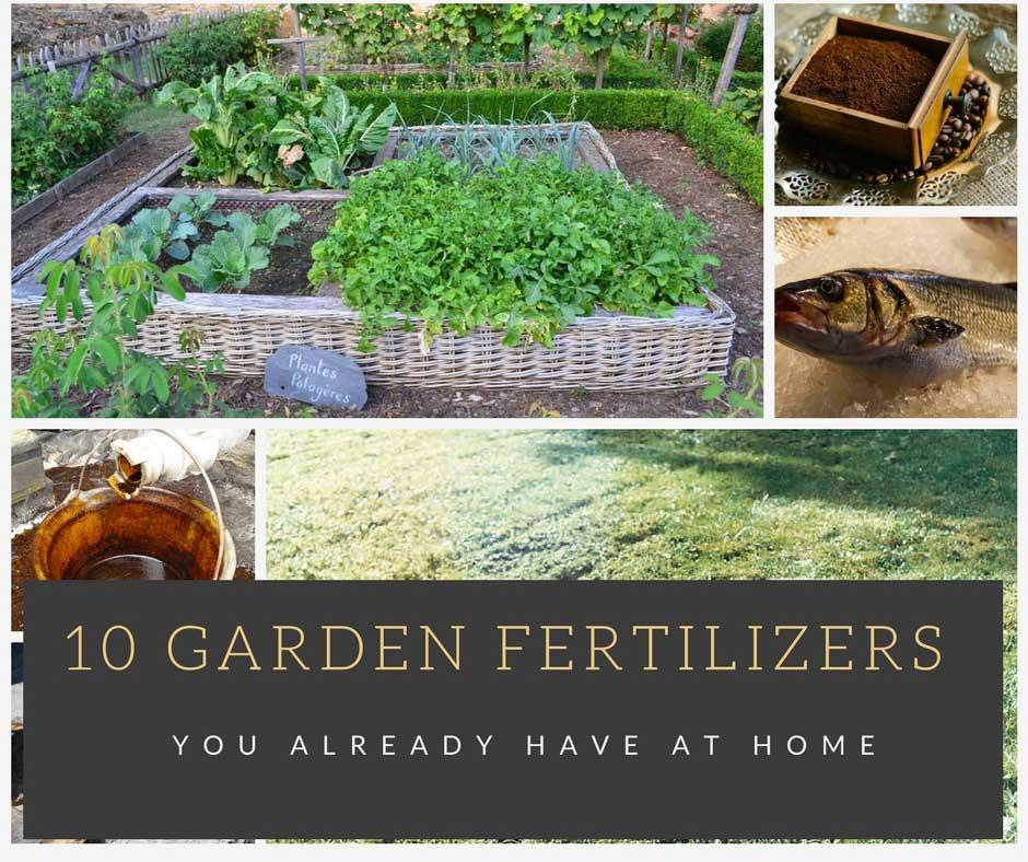 10 Garden Fertilizers You AlreadyHave at Home