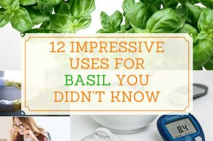 12 Impressive Uses for Basil You Didnt Know