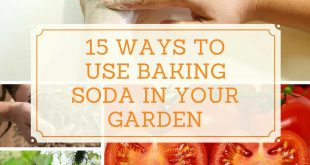 15 Ways to Use Baking Soda in Your Garden