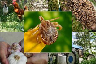 8 Natural Methods for Banishing Ticks from Your Garden