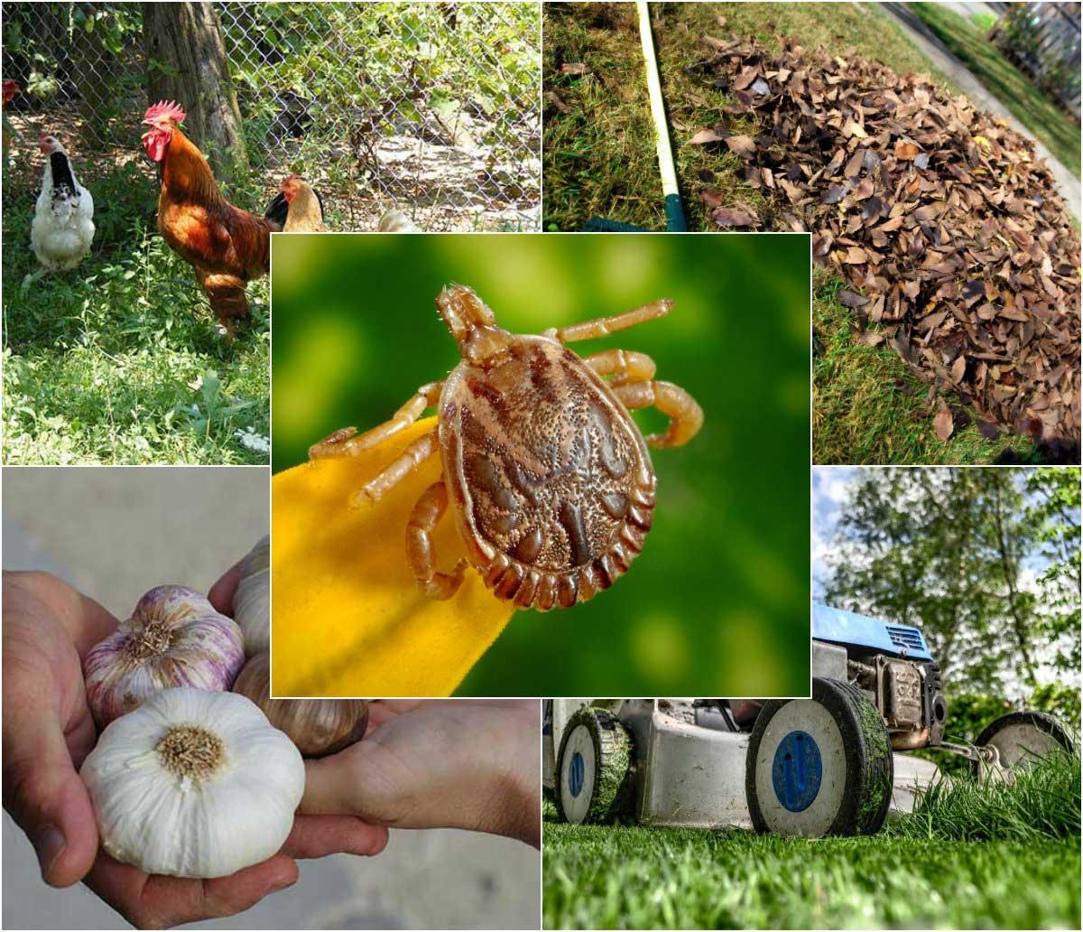 8 Natural Methods for Banishing Ticks from Your Garden
