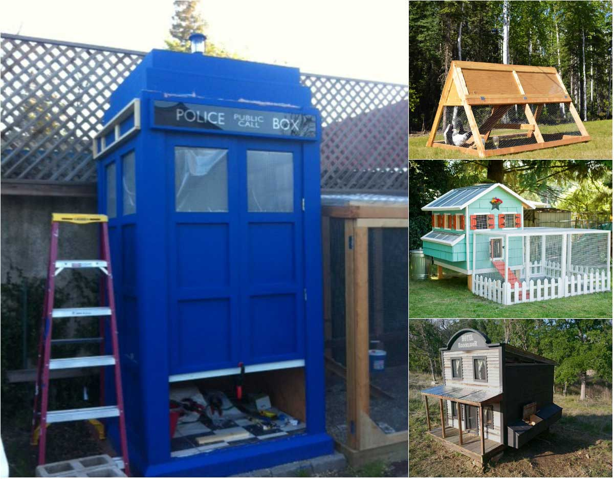 9 Creative Chicken Coop Designs
