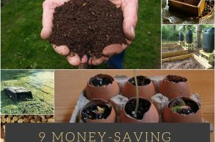 9 Money-Saving-Gardening-Tips