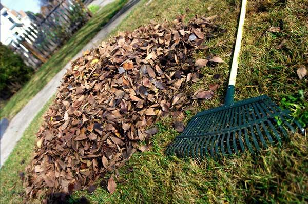 Ticks love decomposing leaves