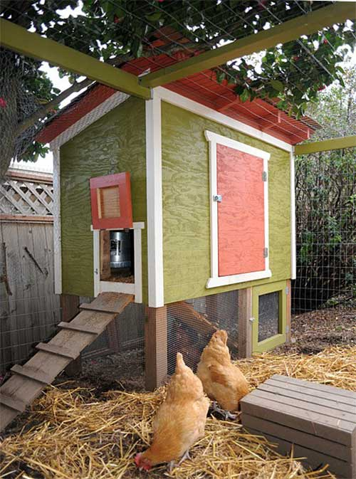 The Urban Chicken Coop