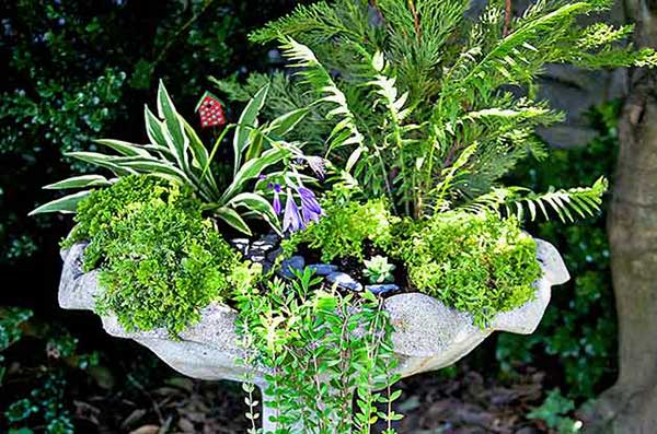 Turn a Birdbath Into a Mini Garden