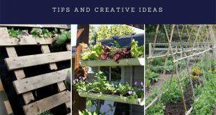Growing a Vertical Garden: