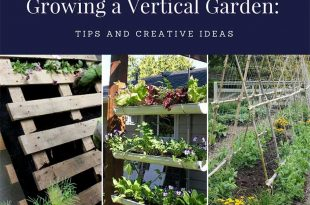 Growing a Vertical Garden: