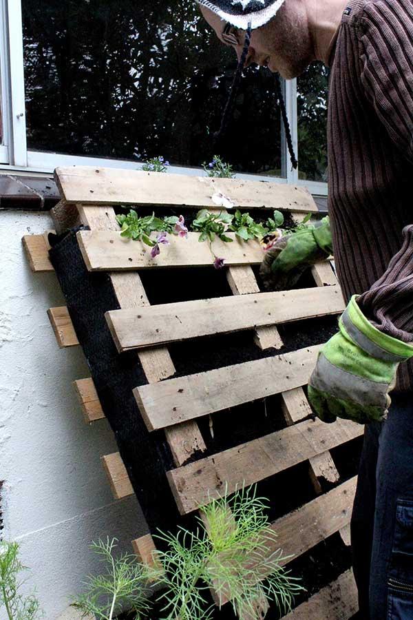 Growing A Vertical Garden Tips And Creative Ideas Home