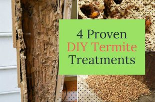 4 Proven DIY Termite Treatments