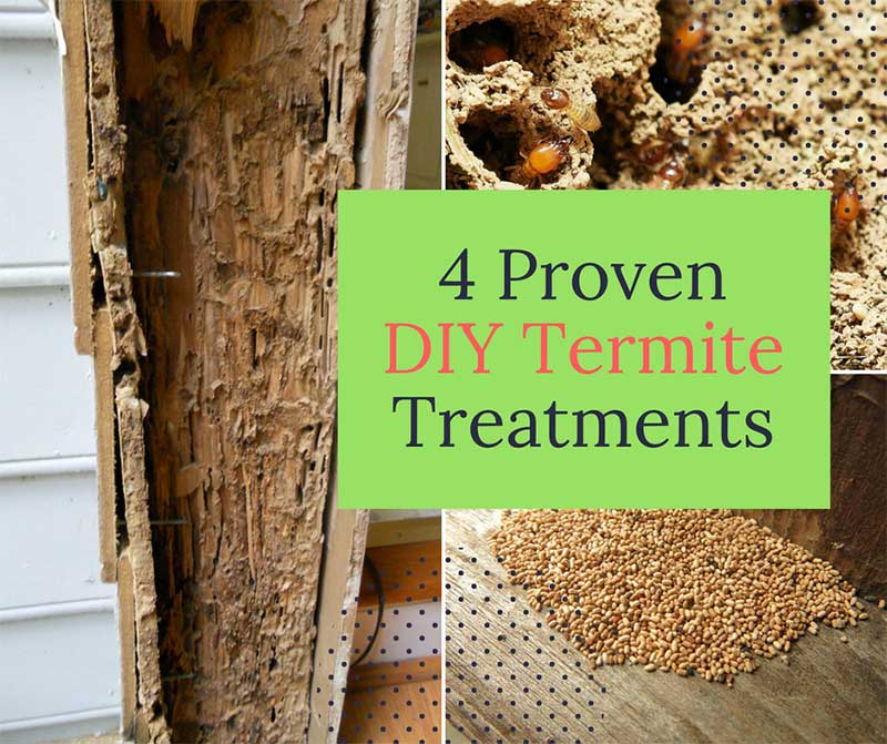 4 Proven DIY Termite Treatments