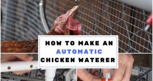 Making an Automatic Chicken Waterer