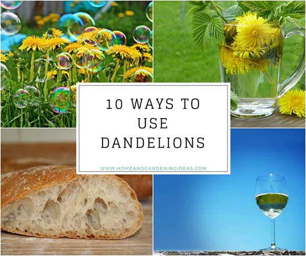 10 Ways to Use Dandelions