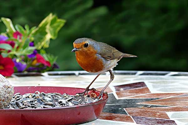 Add to Bird Seed