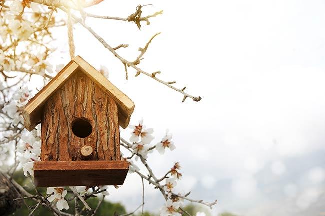 Should You Add Birdhouses