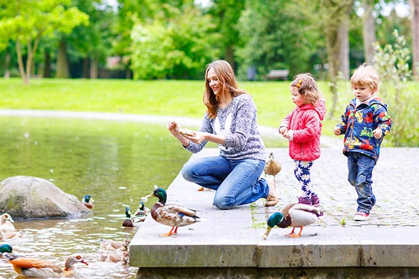Feed the Ducks at a Local Pond