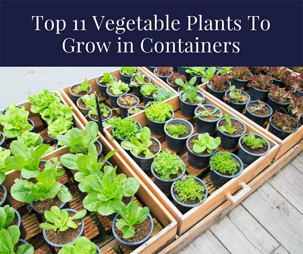 Top 11 Vegetable Plants To Grow in Containers