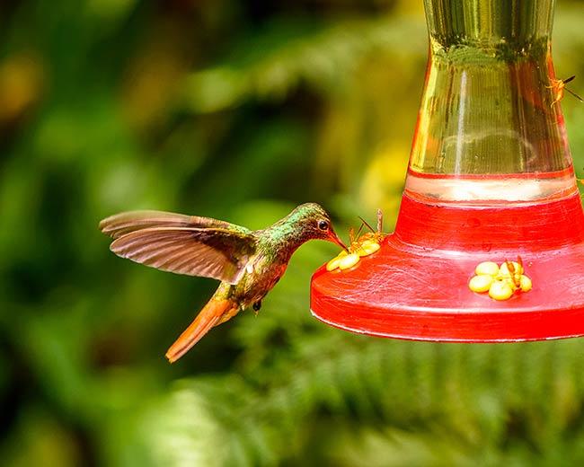 What Do Hummingbirds Eat