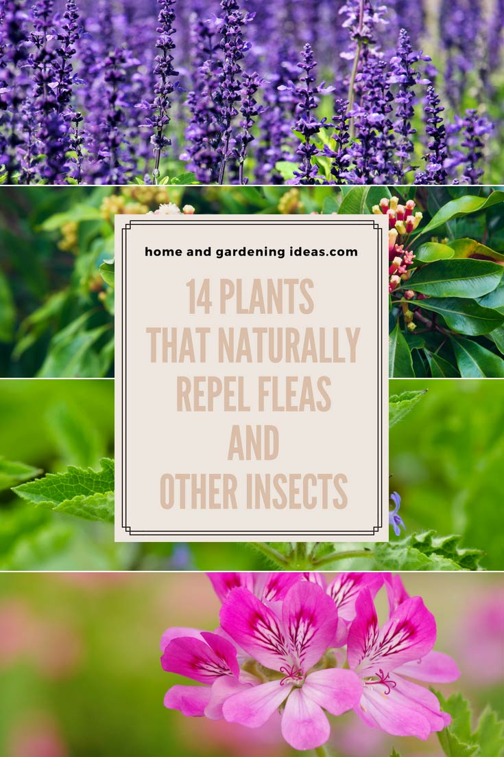 14 Plants that Naturally Repel Fleas and Other Insects