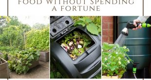 9 Ways to Grow More Food Without Spending a fortune