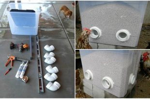 DIY Bulk Chicken Feeder