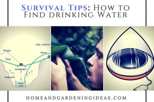 Survival Tips: How to Find drinking Water